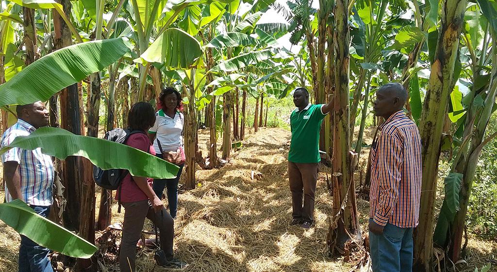 Vitamin A banana trial in Burundi, photo by Beatrice Ekesa