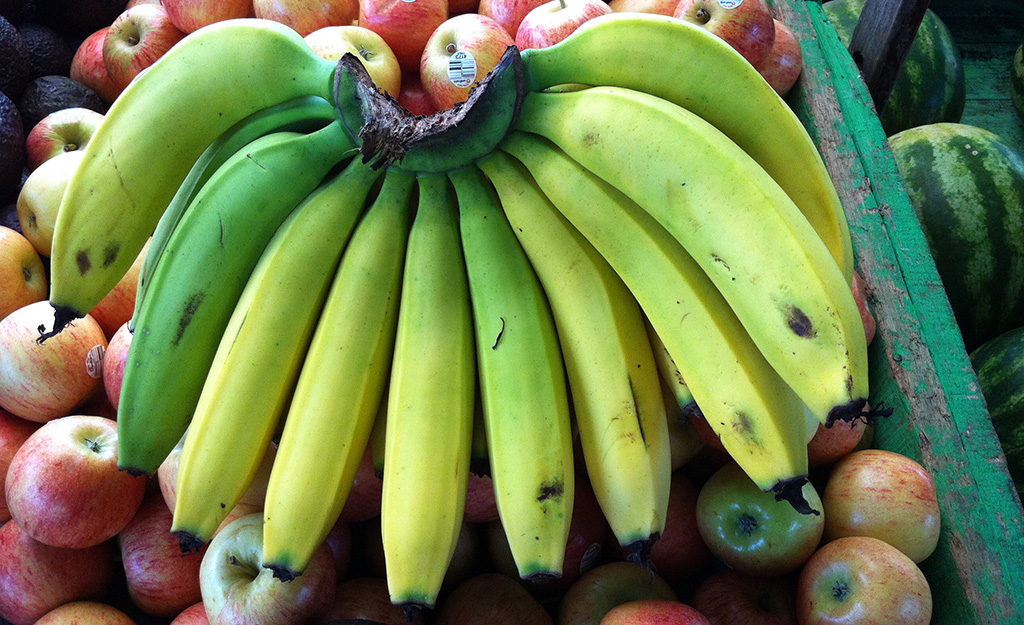 Gros Michel bananas, photo by Miguel Dita