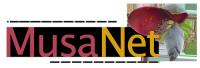 MusaNet_logo